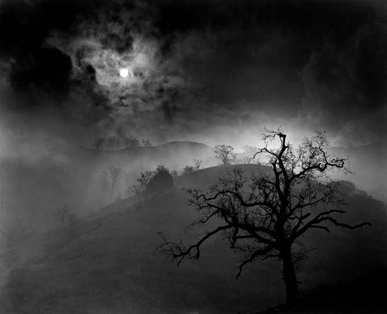 Wynn Bullock - Stark Tree, 1956 [1080]